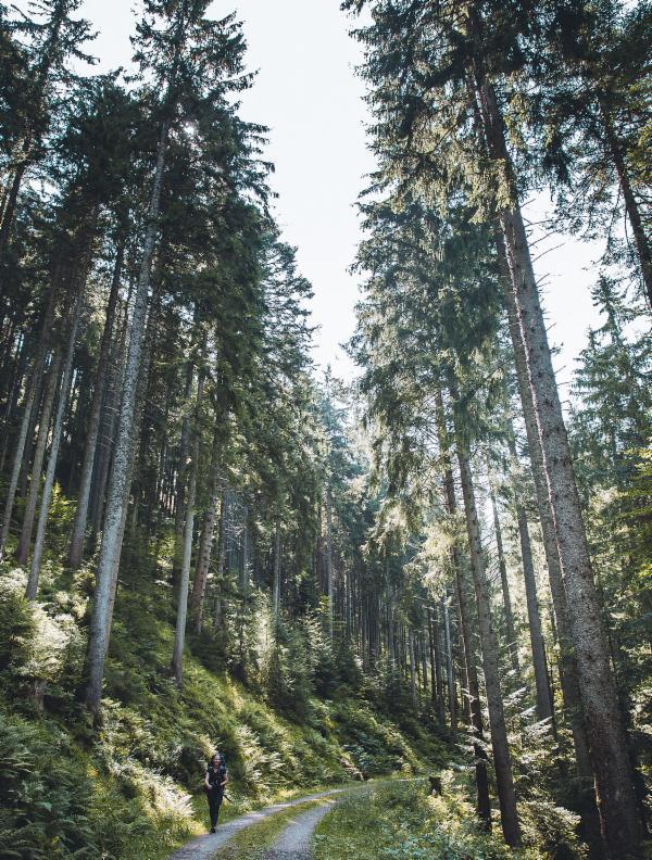 waelder-und-gipfel-vom-schwarzwald-in-die-alpen-24