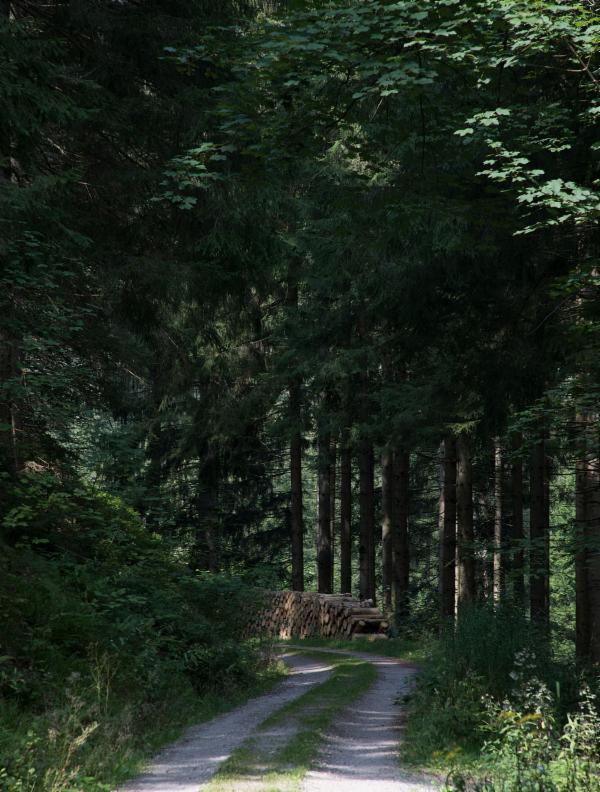 waelder-und-gipfel-vom-schwarzwald-in-die-alpen-20